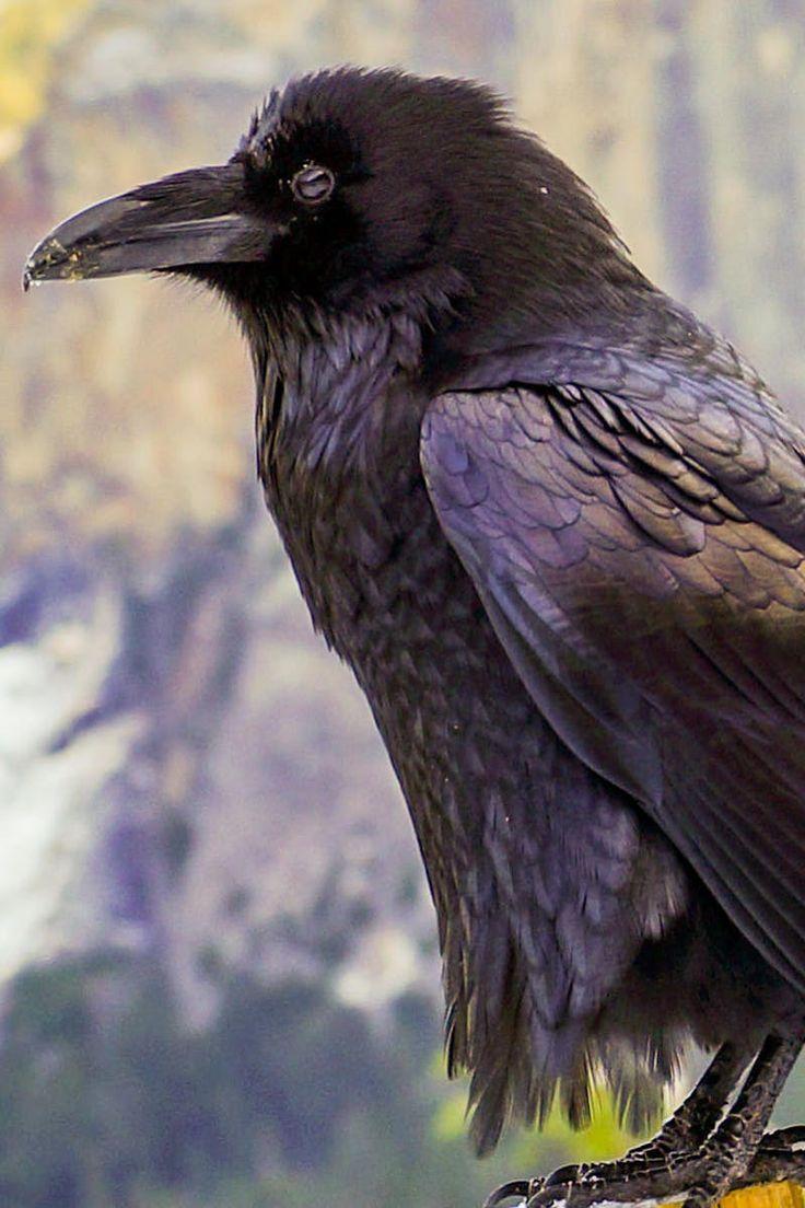 Crow Perch on Tree Near Mountain