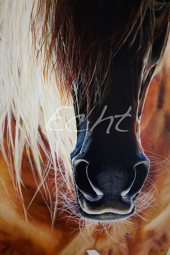 UNCONDITIONAL by Whetū van den Oever  Horses!
