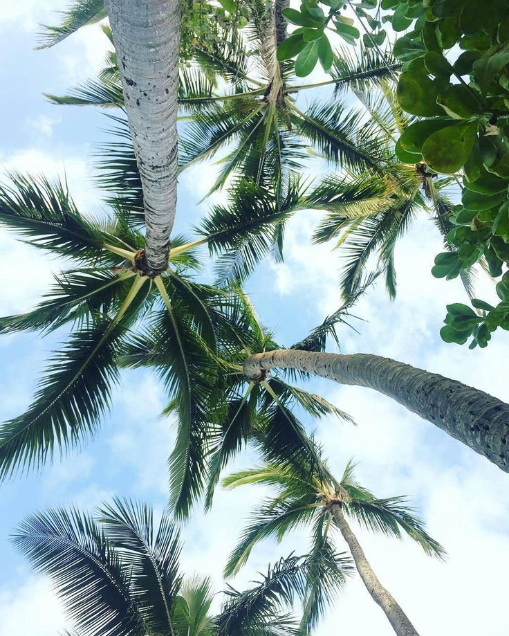 https://www.instagram.com/p/BQLj8KsBVMG/ #travelawesome #travelmore #travel #instatravelling #instatravel #trip #trips #instatrip #palm #palms #palmtree #palmtrees Credit @almudenanyc #palmtreesfordays#travelpics #beach #tropicisland #tropics #travelblogger #traveler #travelers #chill