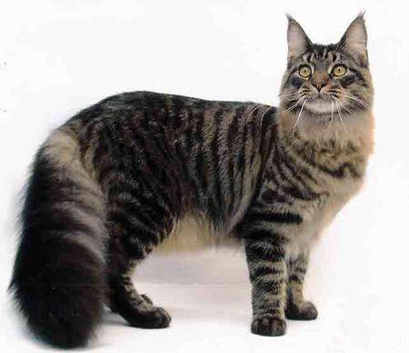 Il gatto, il felino di compagnia per eccellenza, venerato nell'antichità, occupa lo spazio delle nostre case con una presenza regale. Le differenze il cane.