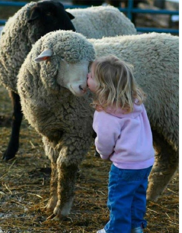 ♥ Sheepish Kiss!! by bluebellsharmin on Flickr