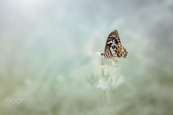 Segregated - Butterfly