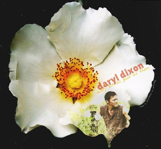 Daryl dixon cherokee rose lets watch some tv for Cherokee rose