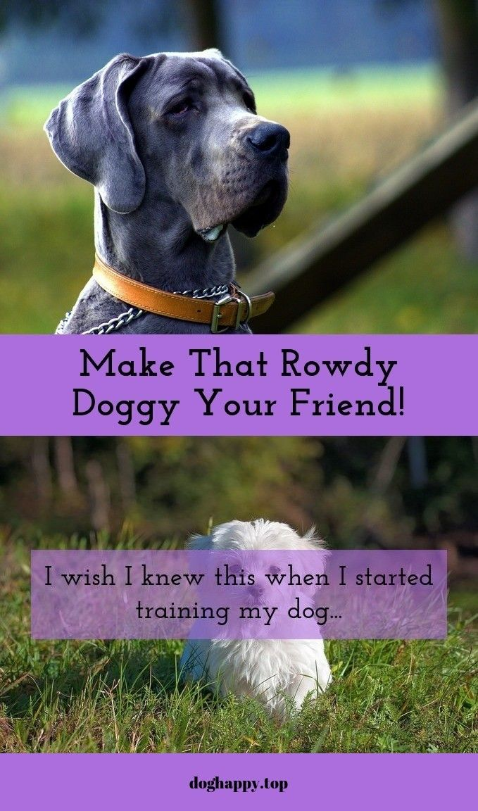 Tips On How To Train Your Dog Training Your Dog Dogs Your Dog