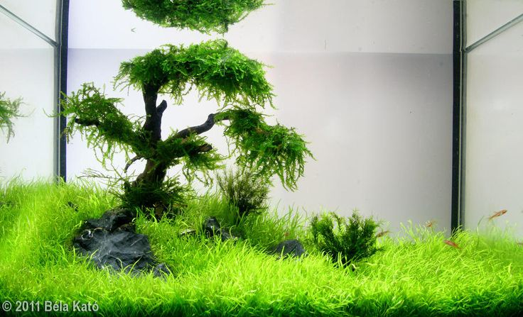 Lovely little 6 gallon tree tank | Aquascapes | Pinterest ...