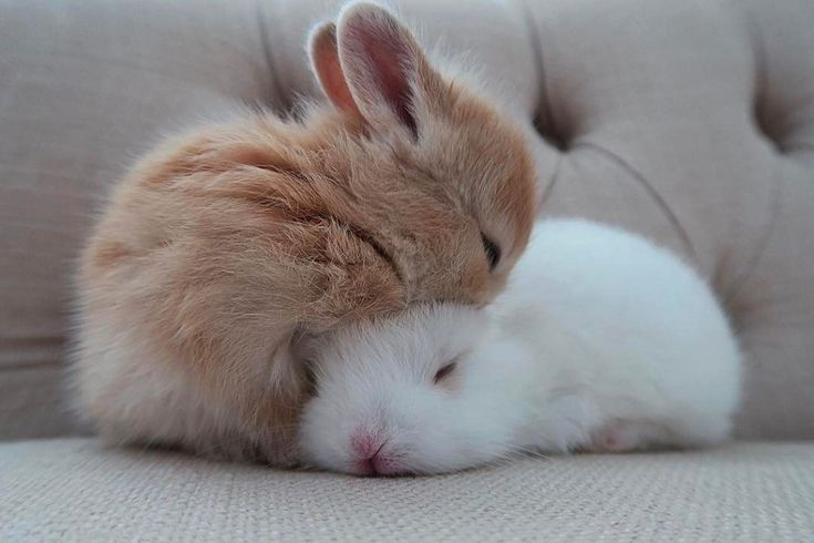 When you are searching for a furry friend which is not only extremely cute, but easy to have, then look no further than a family pet rabbit.