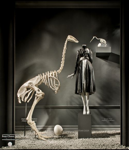 Bergdorf Goodman Windows - Bone Clones, Inc. - Osteological Reproductions