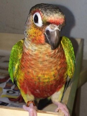 Kiwi quiere participar y desear suerte a todos los participantes Concurso de fotos de verano  en Sexado de aves