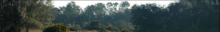 Image detail for -... florida hog hunting and trophy boar hunts on our private florida ranch