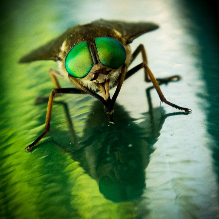Green fly eyes by Andrea Simonetto on 500px
