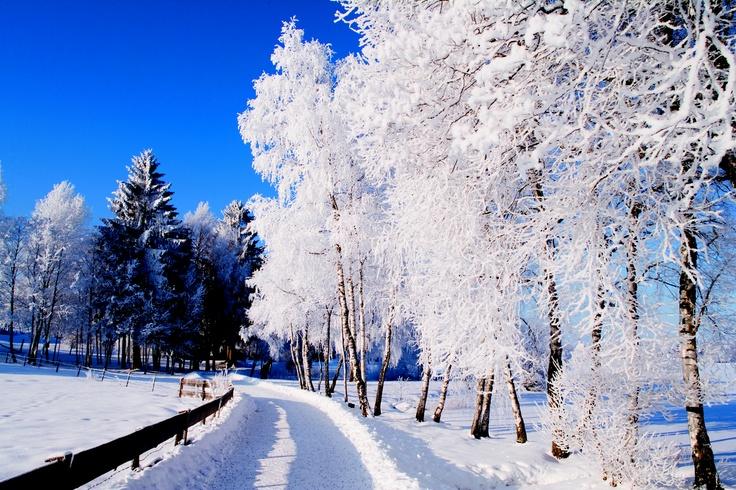 #winter #snow #bavaria