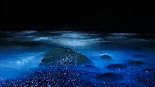 Luminous Jellyfish On The Japanese Beaches Different