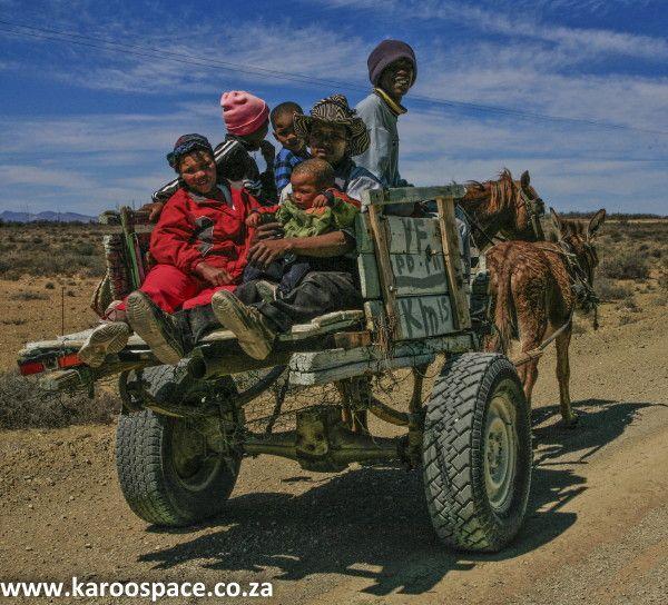 karoo donkeys