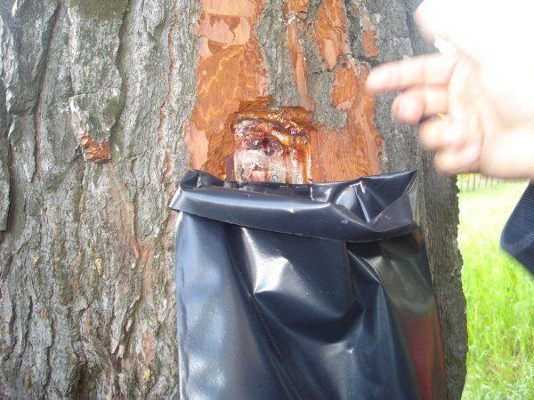 Απολιθωμένο δάσος - http://www.ilia-mare.gr/apolithomeno-dasosΈνα σπάνιο γεωλογικό μνημείο της Φύσης, που ο επισκέπτης αξίζει να το περιλάβει στην εξερεύνηση της ευρύτερης περιοχής, είναι το απολιθωμένο δάσος Κερασιάς μεταξύ των χωριών Κερασιά-Αγία Άννα-Παπάδες. Αριθμεί ηλικία 10 έ
