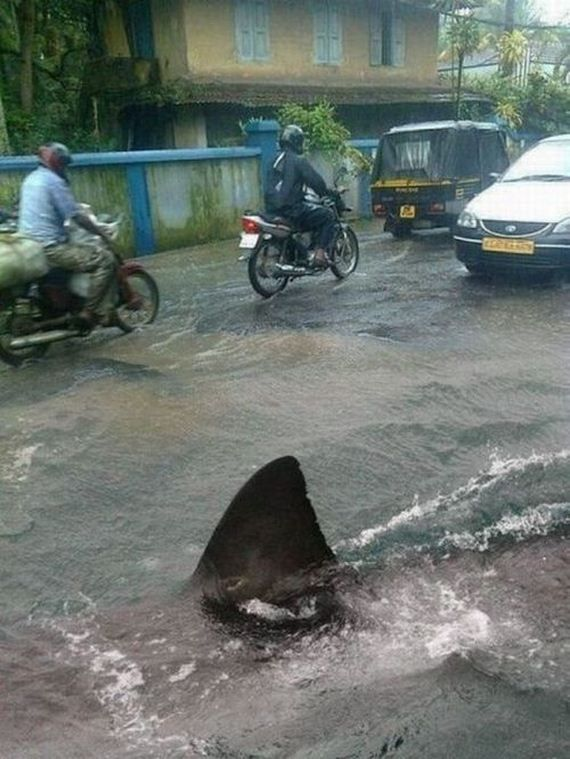 """There's always a chance it's a fake like the famous """"Hurricane Irene/Puerto Rico street shark"""" but the story is that the floods in Thailand brought Bull sharks in from the harbors and up local streets, creating a hazard for pedestrians - you decide!"""
