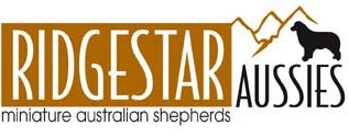 Ditto | Ridgestar Aussies | Miniature Australian Shepherds | Bellingham, WARidgestar Aussies