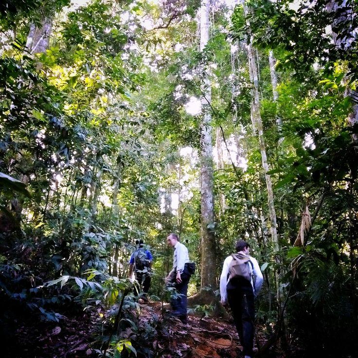 Jungle trekking to see orang utan North sumatra-Indonesia