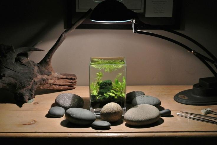 68 best pets aquariums nano images on pinterest fish tanks aquarium ideas and fish aquariums. Black Bedroom Furniture Sets. Home Design Ideas