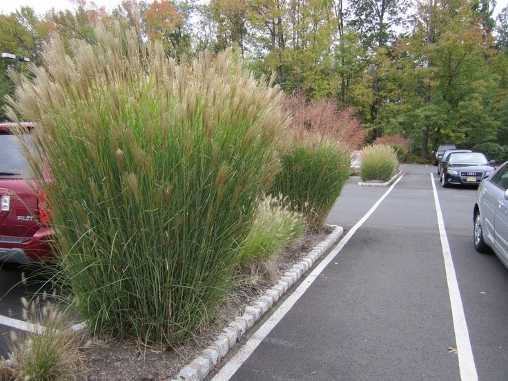 14 best trawy images on pinterest magic decks and for Zebra grass landscaping ideas