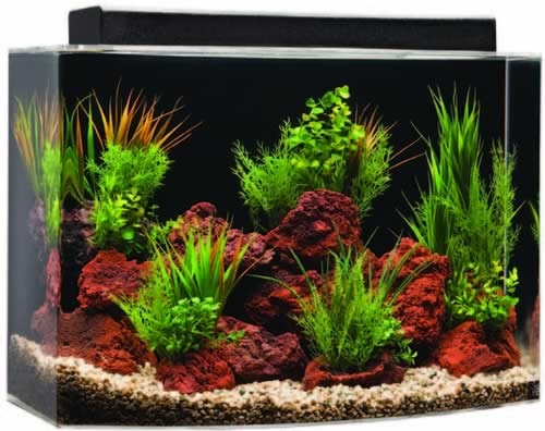 46 Gallon Bowfront Systems ll Acrylic Aquarium 36x16.25x20 surround with concrete kids table raised platform for tank