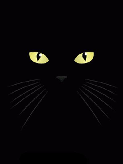 VISITE: https://www.facebook.com/GifsMensagens/ =^.^=  Gato preto não dá azar...dá AMOR!