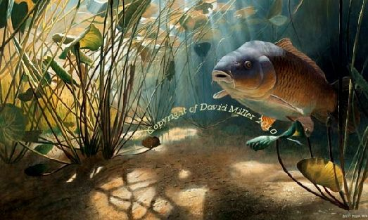 The Mythical Common by David Miller open edition print A3:£44.00 A2: £54.00