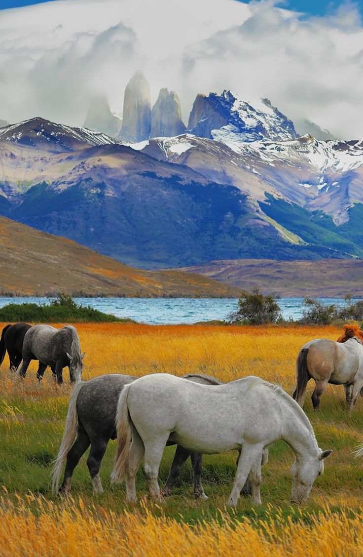 Dsicover the rugged beauty of Torres del Paine in Southern Chile's Patagonia region. #chile #patagonia #horses #mountains