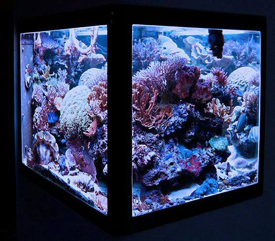 11 Curated Reef Cube Aquariums Ideas By Guric1van