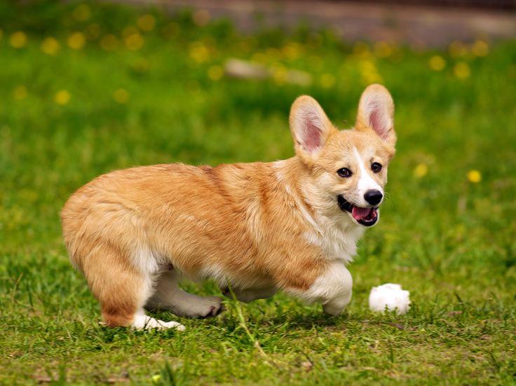 Сколько длится течка у собак: Полезные советы по уходу за животным