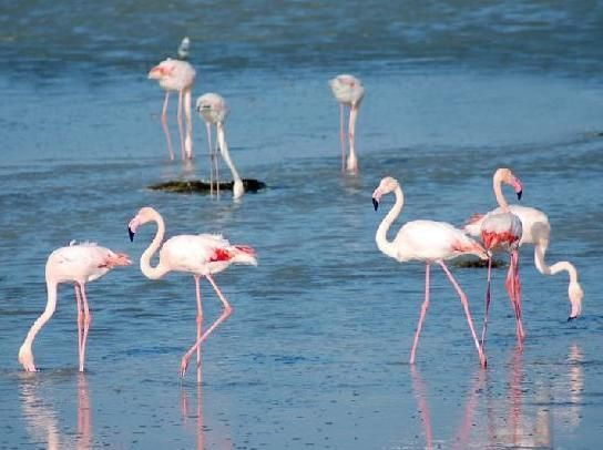 о. Джерба (Тунис) - это Стаи розовых фламинго и живописные прибрежные скалы, в которых, если верить легендам, до сих пор спрятаны несметные сокровища легендарного пирата Драгута Реиса.  Вылет из Краснодара 06.06...   8 дней/7 ночей   Hotel Safira Palms 4*   Всё включено   24800 руб./чел.  8 (965) 47-15-140 http://www.litl.ru/