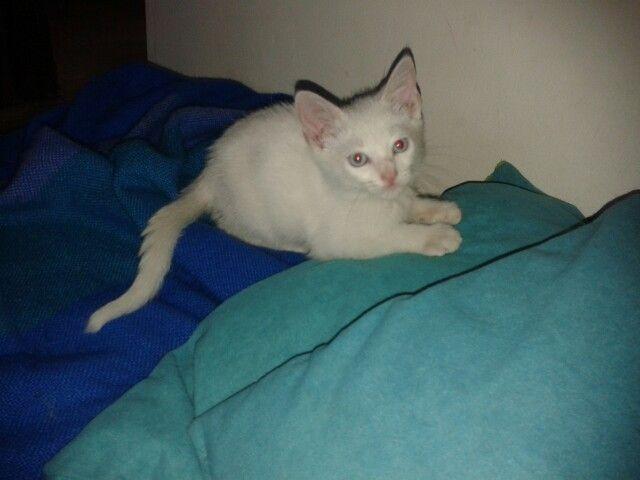 #cat Agatha