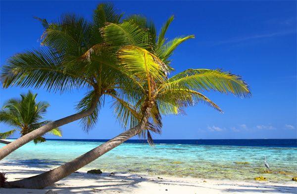 Bahaaahhhhamas: Dream Vacation, Beaches, Favorite Places, Beautiful, Places I D, The Bahamas, Travel