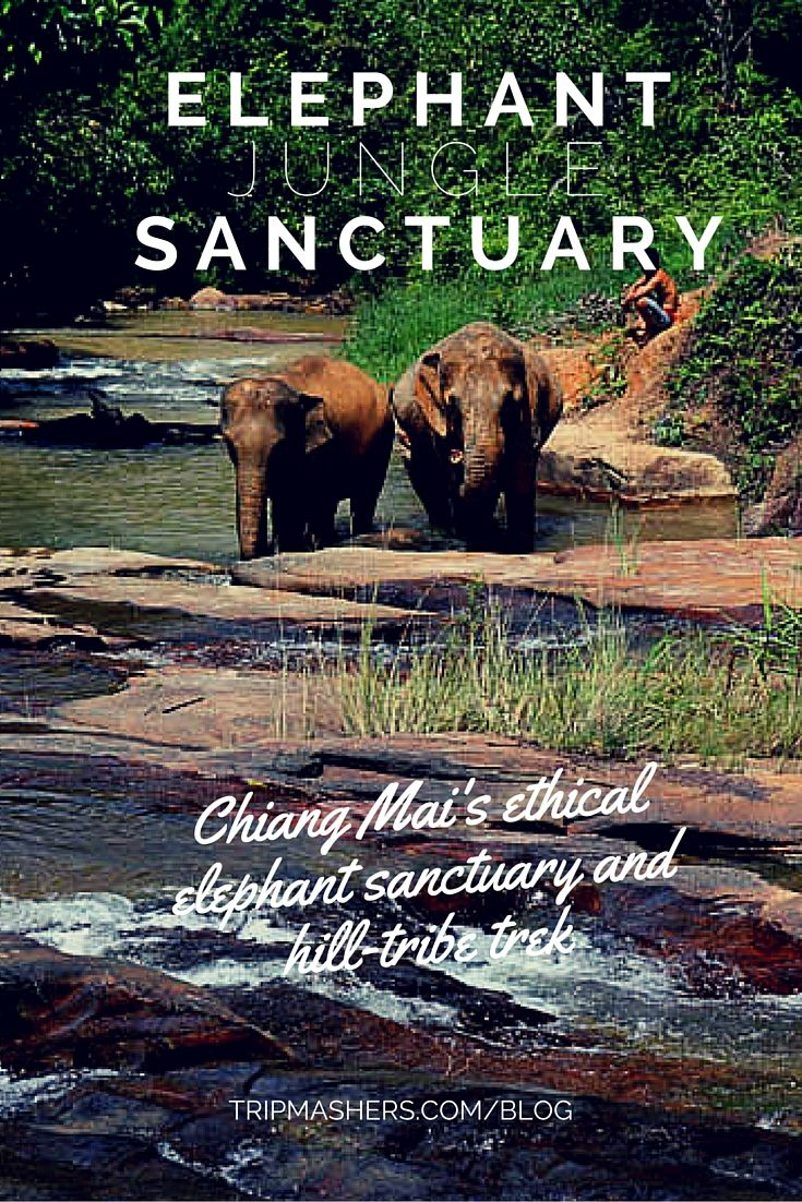 A review of the Elephant Jungle Sanctuary, Chiang Mai, Thailand #travel