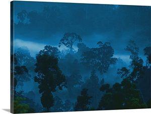 Twilight view of Borneo rain forest, Danum Valley Conservation Area, Borneo, Malaysia