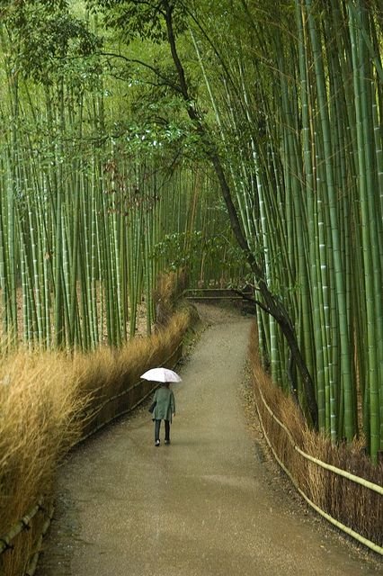 Japan - Arashiyama, Kyoto. Facts about Japan: Area: 377,801 sq km. A 3,000 km arc of four large islands (Honshu, Hokkaido, Shikoku, Kyushu) and 3,000 small islands in NW Pacific. Mountainous; only 13% can be cultivated. Population: 126,995,411. Capital: Tokyo. Official language: Japanese. Languages: 16.
