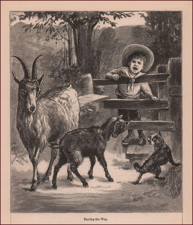 59 best Antique & Vintage Farm Animals images on Pinterest ...