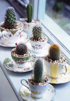Cheap teacups + cheap cacti = pretty little plants that are easy to take care of and live long!