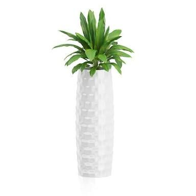 Image result for best plant for tall pot