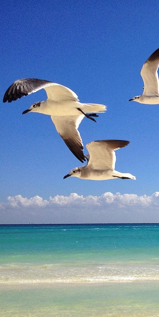 "Отели ""Occidental Hotels & Resorts"" – с компанией «Инна Тур»! Остров Косумель, Мексика.  Подробности: +7(495) 7421717, sale@inna.ru , www.inna.ru   Будьте с нами! Открывайте мир с нами! Путешествуйте с нами!  #occidential#inna#cuba#dominicanrepublic#costarica#aruba#mexico#travel"