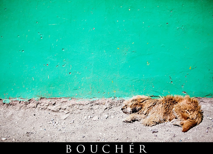 Dog & Teal Wall, Port Au Prince, Haiti, Photos by: © Weston Bouchér, http://www.BoucherPhotography.com/blog, Non-Profit Photography, Humanitarian, Children of the Nations, Flood Church