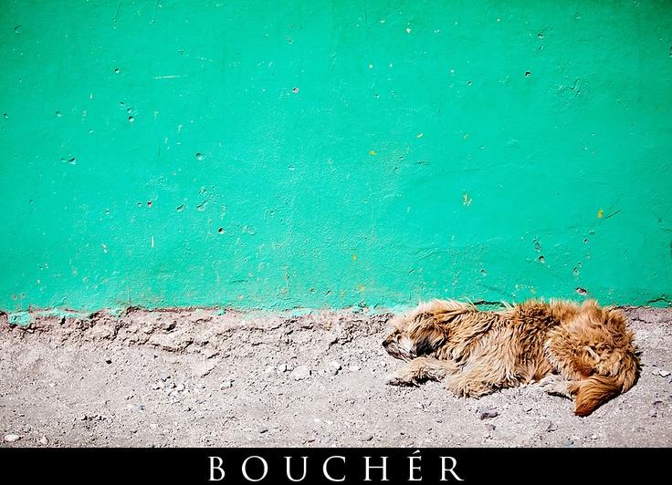 Dog & Teal Wall, Port Au Prince, Haiti, Photos by: © Weston Bouchér, http://www.BoucherPhotography.com/blog, Non-Profit Photography, Humanitarian, Children of the Nations, Flood Church