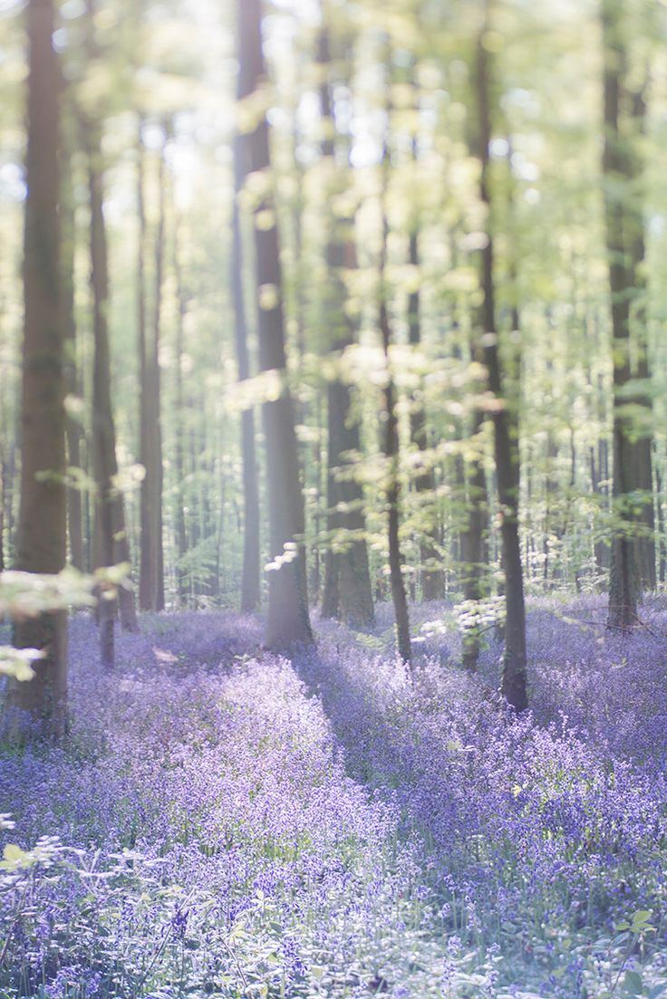Nature Photography - Bluebell Wood Landscape Photograph, Home Decor Fine Art Photograph, Large Wall Art by GeorgiannaLane on Etsy https://www.etsy.com/listing/197797919/nature-photography-bluebell-wood
