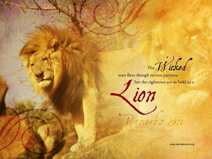 The wicked flee though no one pursues, but the righteous are as bold as a lion - Bing images
