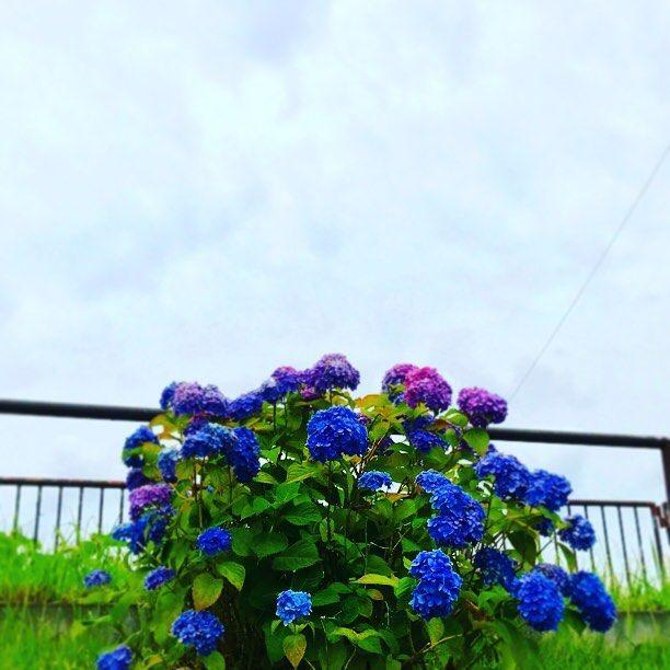 Instagram photo by Noda Fumiko • Jun 7, 2017 at 6:16 AM