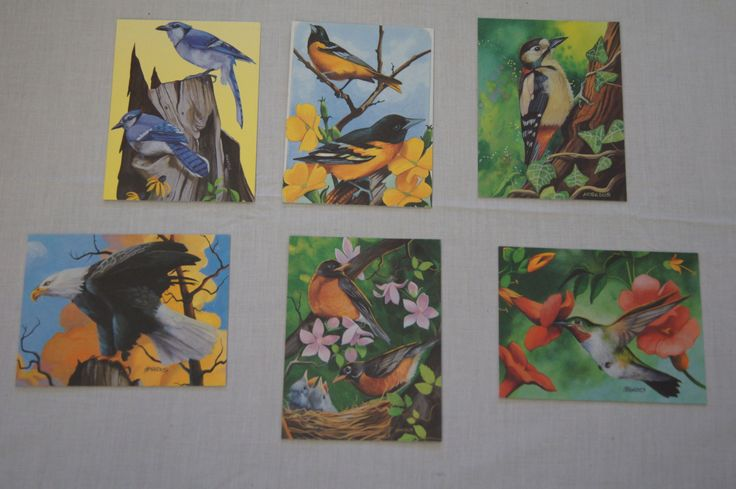 Vintage 1990's - American Paralyzed Veterans Association Cards with Birds, Set of 6 by TheMercerStreetHouse on Etsy