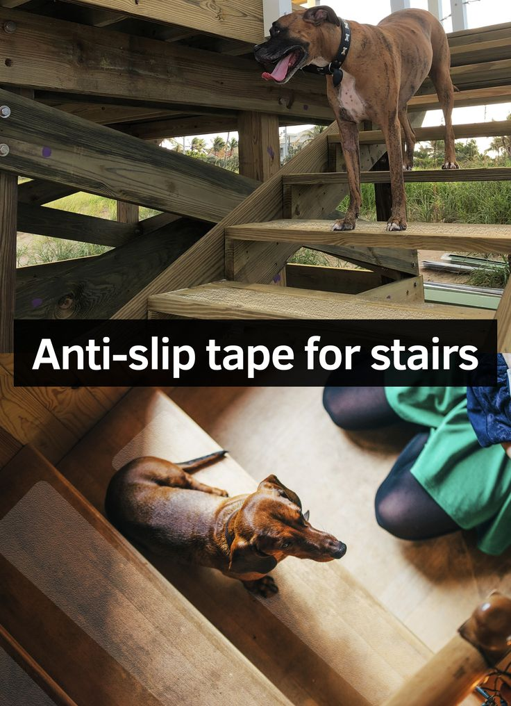 Best Dogs Can Have A Hard Time Using Wood Stairs Thats Why We 400 x 300