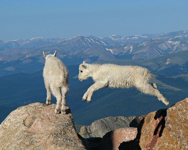 Spectacular Wildlife | 16 Things Colorado Just Does Better