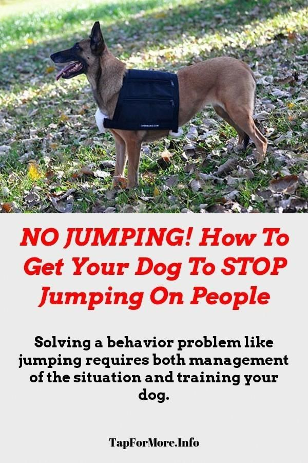 Stop Dog Jumping And Service Dog Training Check The Pic For Lots