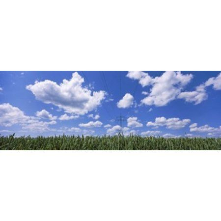 Wheat field and transmission tower Baden-Wurttemberg Germany Canvas Art - Panoramic Images (36 x 13)