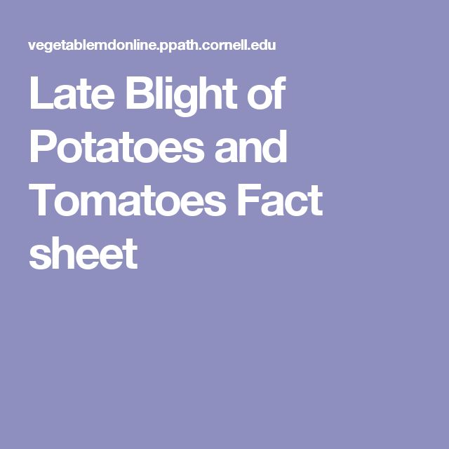 Late Blight of Potatoes and Tomatoes  Fact sheet